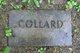 Profile photo:  Collard