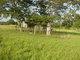 Annie Fleming Cemetery