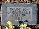 Infant Herring
