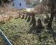 Baldwin Family Burying Ground