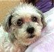Benji 2 The Dog