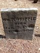 William P Whipple
