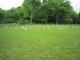 Amish Cemetery (New)
