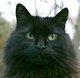 "Profile photo:  Spooky ""Gentle Giant"" Cordeiro"