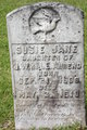 Susie Jane Ahrend