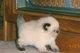 Profile photo:  My Sadie Cat