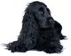 Profile photo:  Tubby The Dog