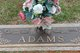Phyllis G Adams