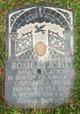 Rosie Di Iorio