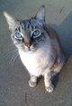 Cats Vance