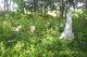 Rothwell Cemetery