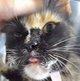 Profile photo:  Alice Sweet Cat