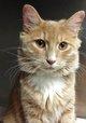 "Profile photo:  Cristian Sweet Boy ""Lovable"" <I>Hecht</I> Cat"