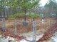 Arthur and Murdock Smith Cemetery