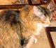 Meowzers Cat