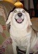 "Marshall the Dog ""Marshie"" Harris"