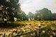 Farmdale Cemetery