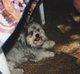 "Profile photo:  Pepper ""Dog"" Coley"