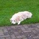 Profile photo:  Dog Lara