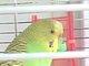 Lima Bird Everhart