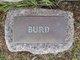 Profile photo:  Burd