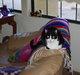 Profile photo:  Oreo The Cat Bleess