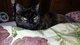 Gabbie Cat Hopper
