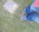 Cemetery Scavenger :)