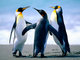 ilovepenguins