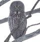 Iowa Owl