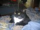 Katrina The Cat