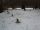 Almy-Briggs-Sanford Family Cemetery