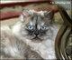 Bailee Brianna Cat