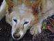 Profile photo:  Aysia (Dog)