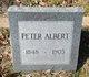 Peter E Albert