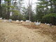 Summerson Cemetery