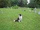 Graveyard Dog