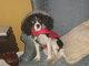Profile photo:  Shawnie (BabyShawn) McGibbon