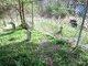 Gilliam Cemetery LG#80