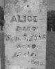 Profile photo:  Alice McCurry
