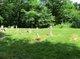 Brower Clymer Cemetery