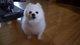 Profile photo:  Gabe The Dog