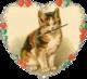 Widget 'Wee Widgie' Kitten