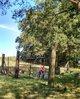 Danny Williams Cemetery