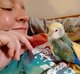 "Profile photo:  Boo ""Birdy Butt"" Lovebird"