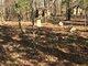 Britt Family Cemetery