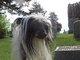 "Profile photo:  Spotley Crue' ""Dot-Dot"" Dog"