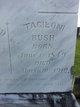 """Taglioni """"Tallie"""" <I>Cochran</I> Bush"""