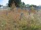 Abner Edwards Cemetery