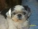 """Profile photo:  Montee Carlow """"PooPoo Dog or Puppy"""" Murry"""